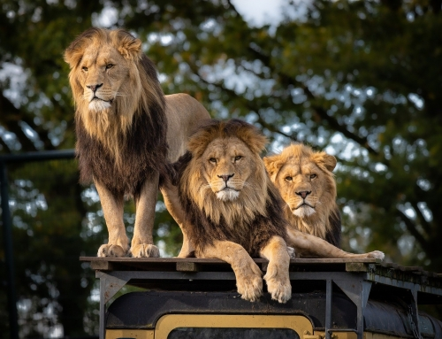 BLACK PLATINUM GOLD – THE 6 BEST AFRICAN SAFARI TOURS OF 2020 – WE LOVE AFRICA!