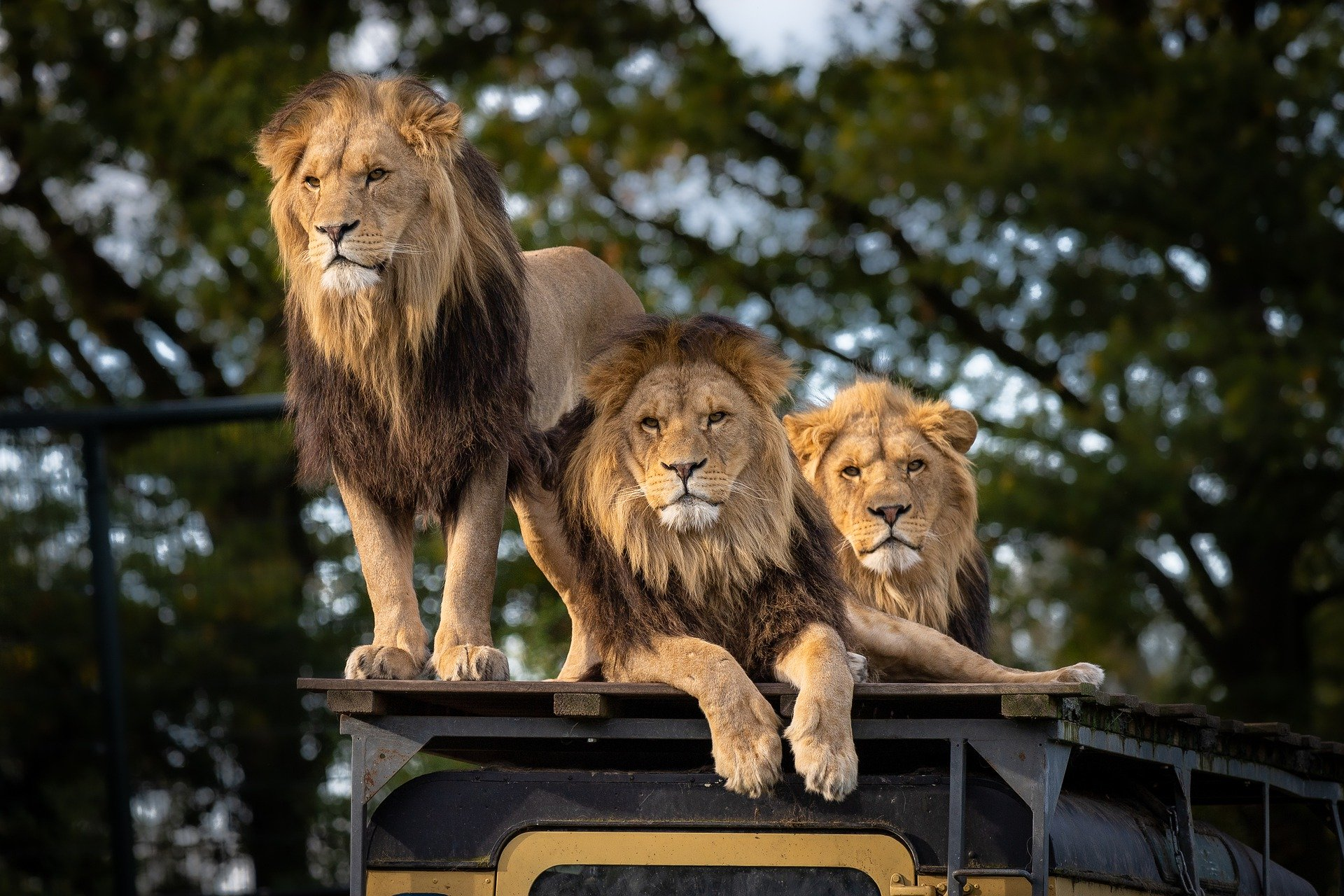 TOP 6 BEST SAFARI TOURS - BLACK PLATINUM GOLD