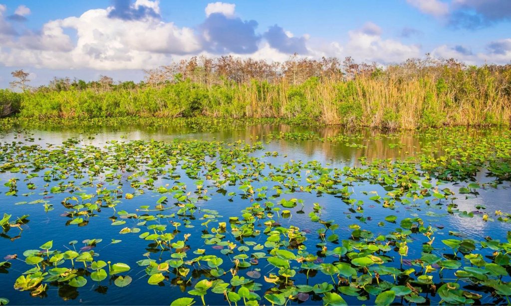 The Everglades National Park in Florida