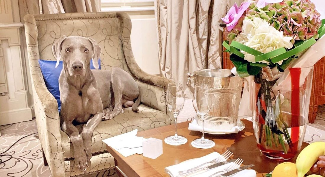 8 of the World's Most Stylish Pet-Friendly Hotels