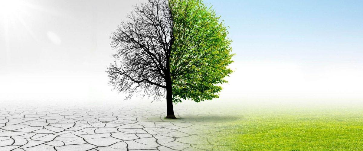 Billionaires Unite to Fight Climate Change