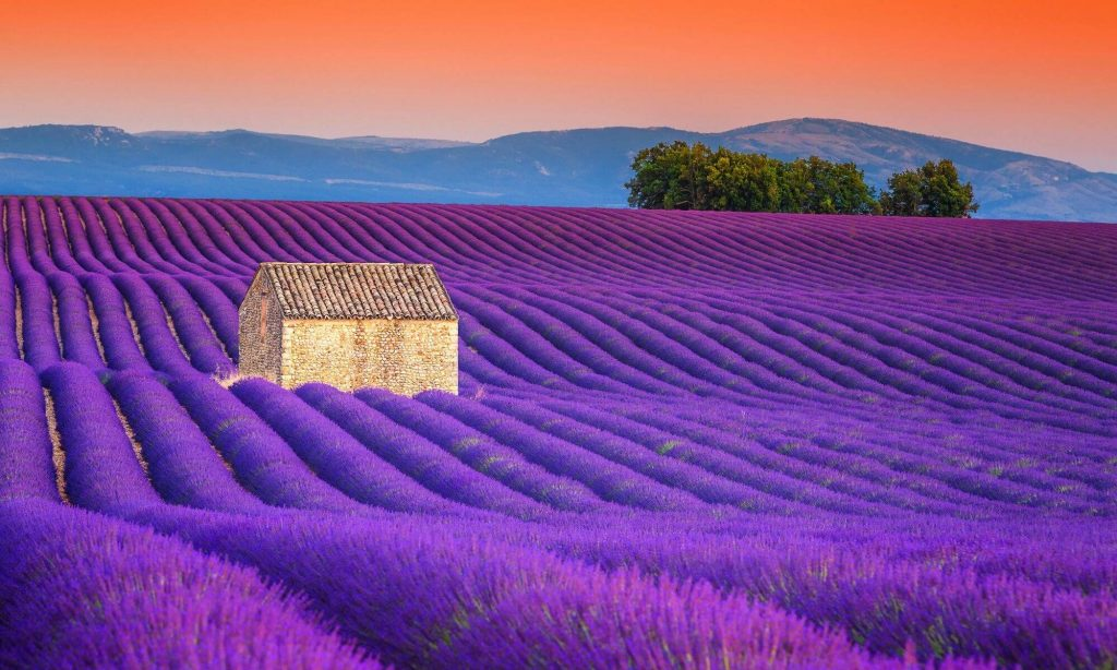 The Beauty of Summer Holiday in France – Black Platinum Gold