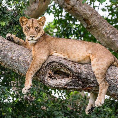 Uganda Tour – 11 Days for 2 People Epic Luxury Wildlife Safari