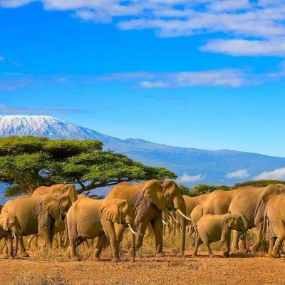 Kilimanjaro Private Climb – 9 Days for 2 People Lemosho Route