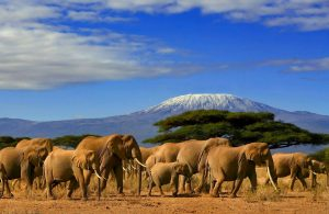 How to Plan The Ultimate Trip To Kilimanjaro | Black Platinum Gold