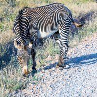 Kenya Tour Wildlife Safari & White Sand Beaches | Black Platinum Gold