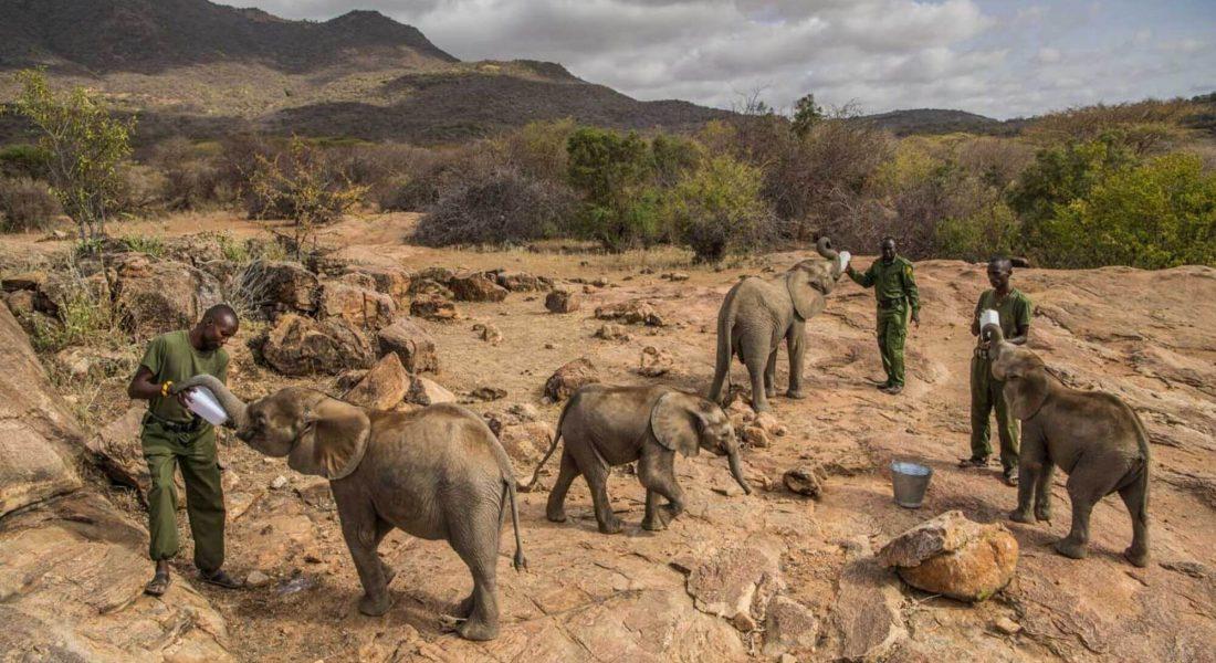 Black Platinum Gold Announces Initiative to Support Orphaned Elephant Calves