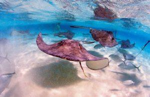 Alternative Caribbean: 6 Unique Experiences in the Cayman Islands   Black Platinum Gold