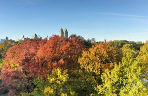 Top 12 Crowd-Free Destinations to Experience Fall Foliage | Black Platinum Gold