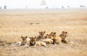 Kantabile Afrika – A Sanctuary in the Serengeti, Tanzania   Black Platinum Gold